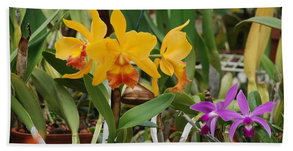 Orange Beach Towel featuring the photograph Orangepurple Orchids by Rob Hans