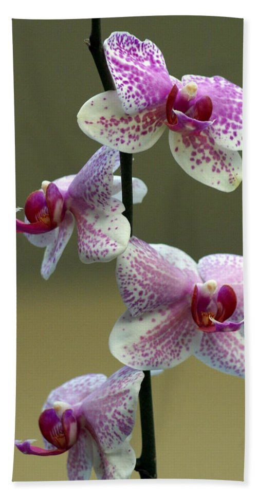 Flower Beach Towel featuring the photograph Orchid 16 by Marty Koch