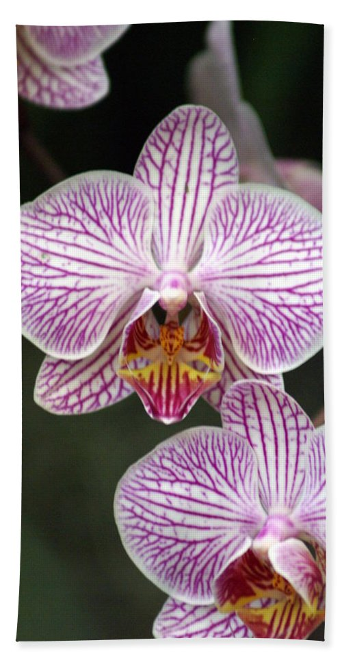 Flower Beach Towel featuring the photograph Orchid 22 by Marty Koch