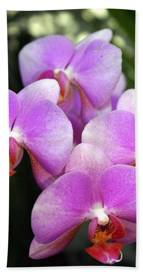 Flower Beach Towel featuring the photograph Orchid 5 by Marty Koch