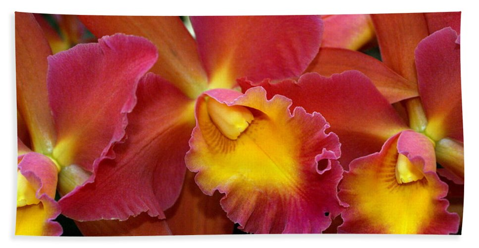 Flower Beach Towel featuring the photograph Orchid 8 by Marty Koch