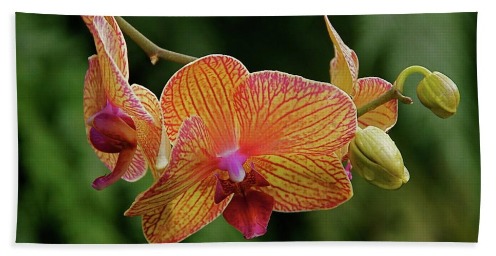 Flowers Beach Towel featuring the photograph Orchid Aliveness by Byron Varvarigos
