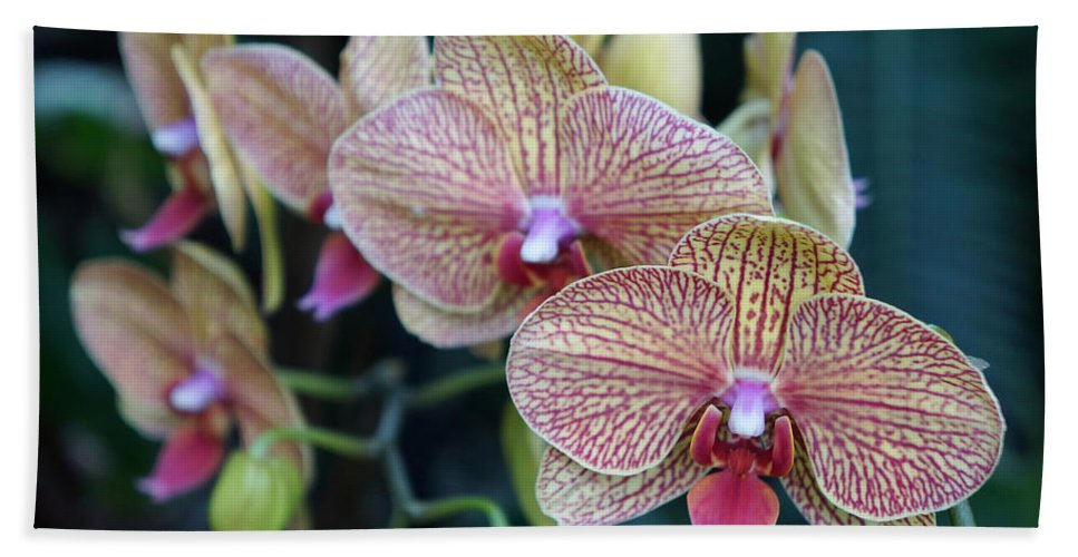 Ann Keisling Beach Towel featuring the photograph Orchid Beauty by Ann Keisling