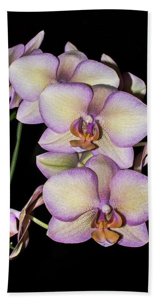 Orchid Blooms Beach Towel featuring the photograph Orchid Blossoms I by Thomas Morrow