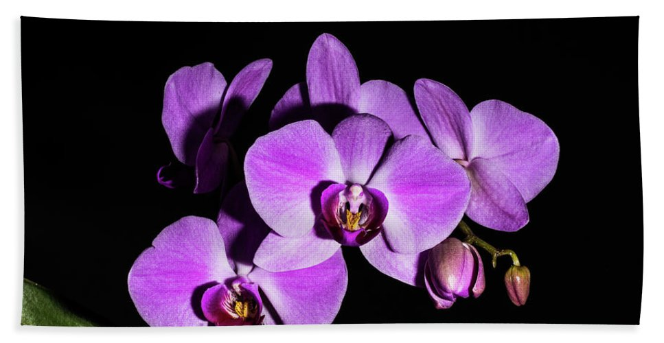 Orchid Bloom Beach Towel featuring the photograph Orchid Blossoms IIi by Thomas Morrow