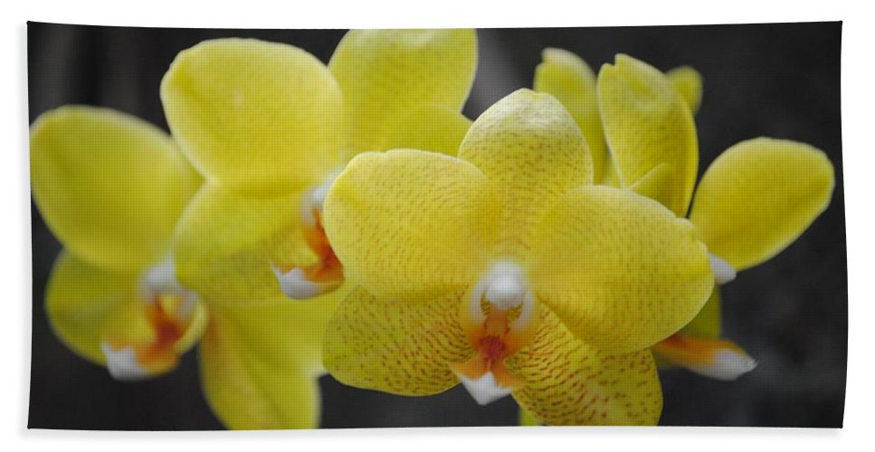 Yellow Beach Towel featuring the photograph Orchid Family by Eric Liller