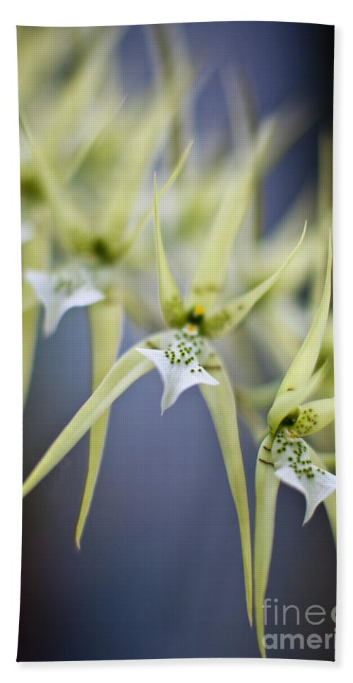 Orchid Beach Towel featuring the photograph Orchid Wave by Mike Reid