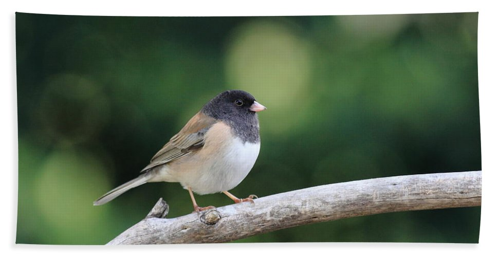 Wildlife Beach Towel featuring the photograph Oregon Junco by Wingsdomain Art and Photography