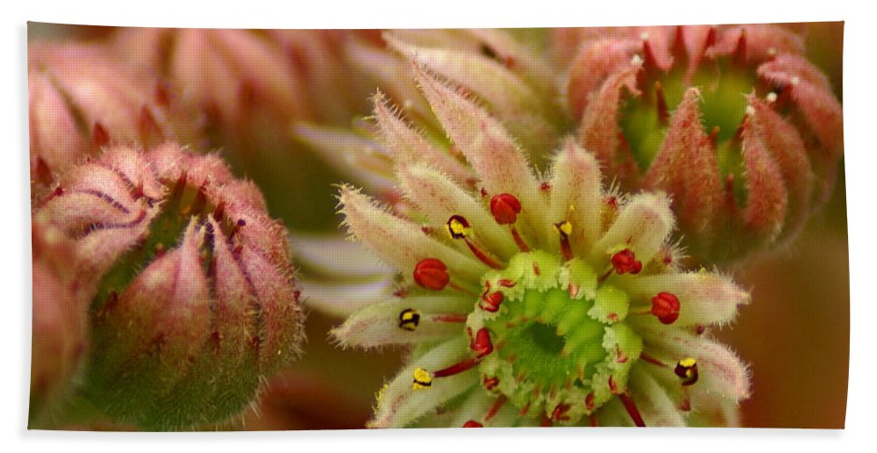 Nature Beach Towel featuring the photograph Ornamental Flower by Ben Upham III