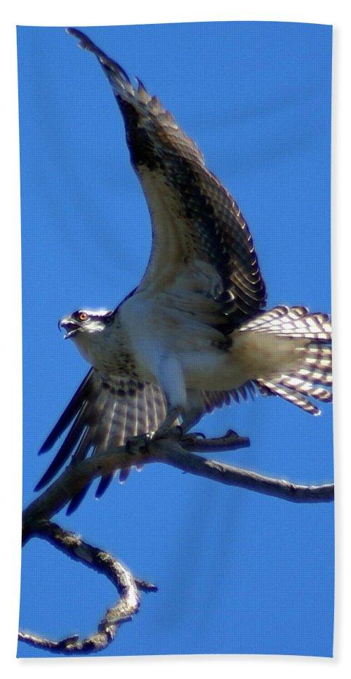 Spokane Beach Towel featuring the photograph Osprey In Flight by Ben Upham III