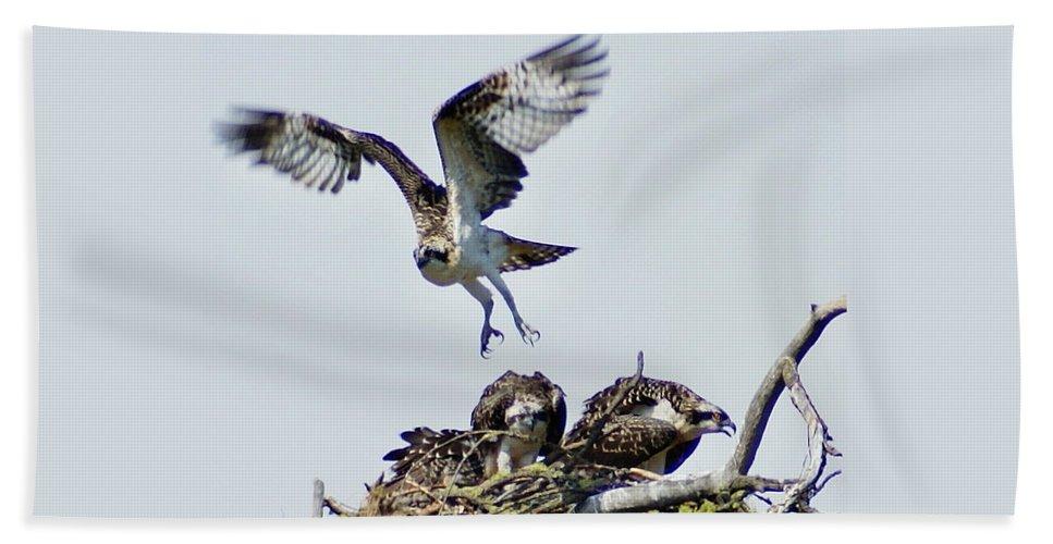 Spokane Beach Towel featuring the photograph Osprey Nest by Ben Upham III