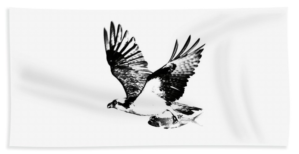 Osprey Beach Towel featuring the photograph Osprey With Catch by Rachel Morrison