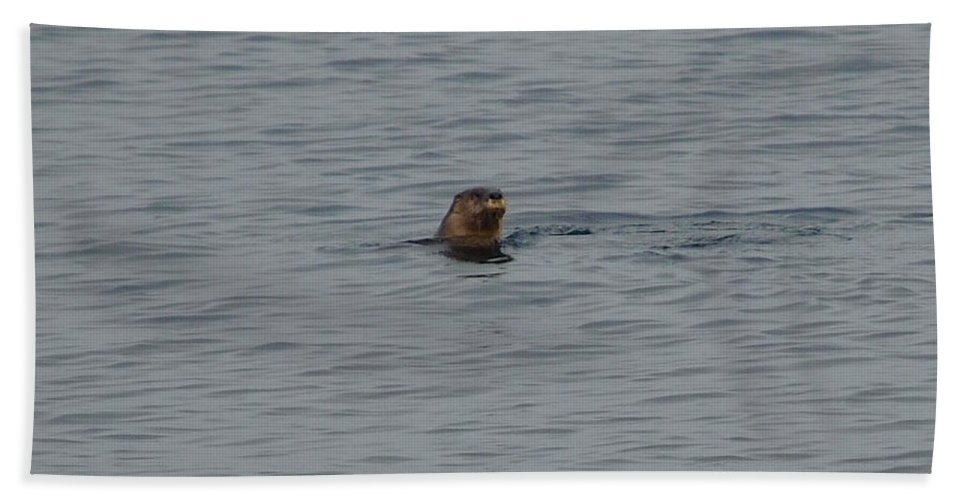 River Otter Beach Towel featuring the photograph Otter In Lake Superior by Hella Buchheim