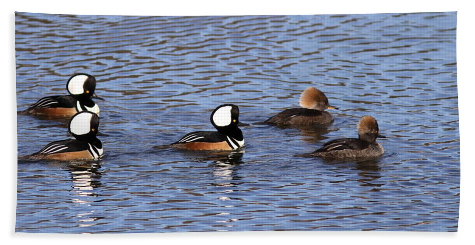 Hooded Merganser Beach Towel featuring the photograph Out For A Stroll by Travis Truelove