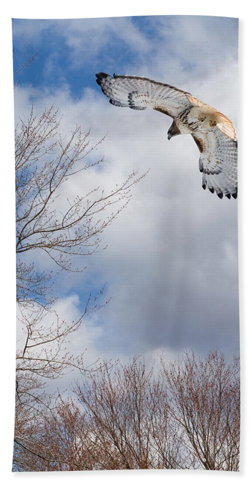 Redtail Hawk Beach Towel featuring the photograph Out Of The Blue by Bill Wakeley