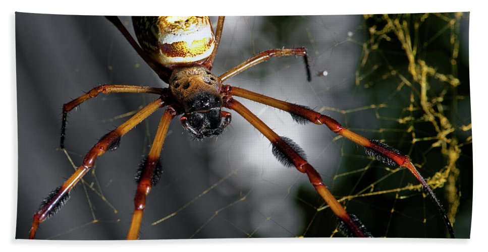 Spider Beach Towel featuring the photograph Out Of The Dark by Christopher Holmes