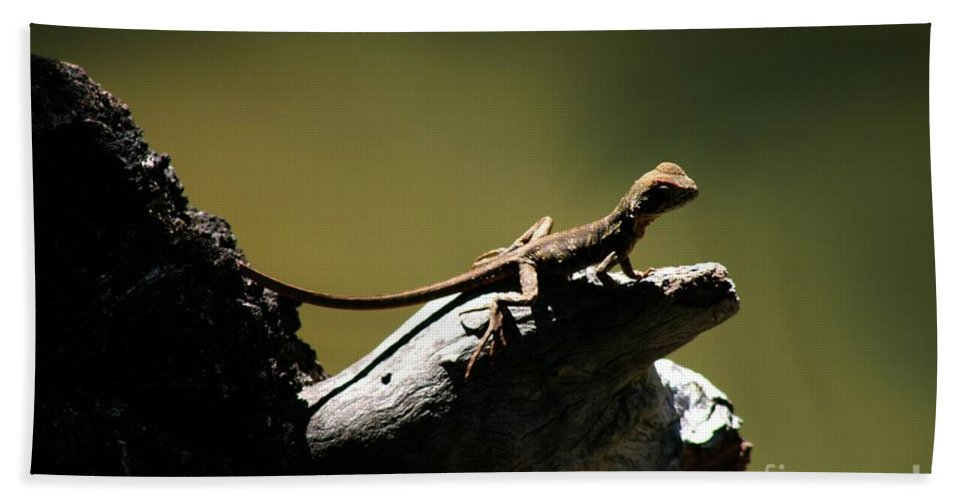 Lizard Beach Towel featuring the photograph Out On A Limb by Gregory E Dean