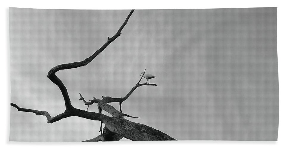 Birds Beach Towel featuring the photograph Out On A Limb by Robert Meanor