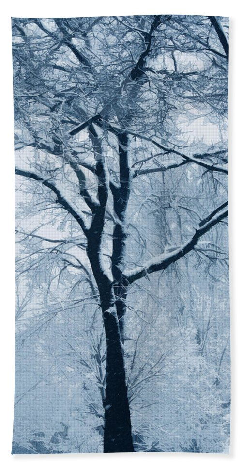 Trees Beach Towel featuring the photograph Outside My Window by Linda Sannuti