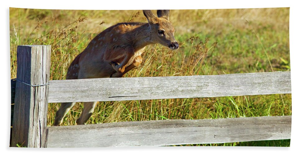 Animal Beach Towel featuring the photograph Over The Fence by Randall Ingalls