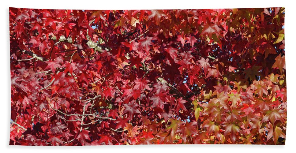 Red Leaves Beach Towel featuring the photograph Overpopulation by Donna Blackhall