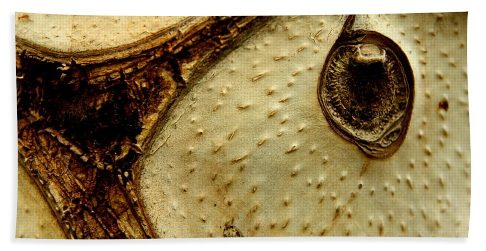 Home Decor Beach Towel featuring the photograph Owl's Eye by Catherine Turner