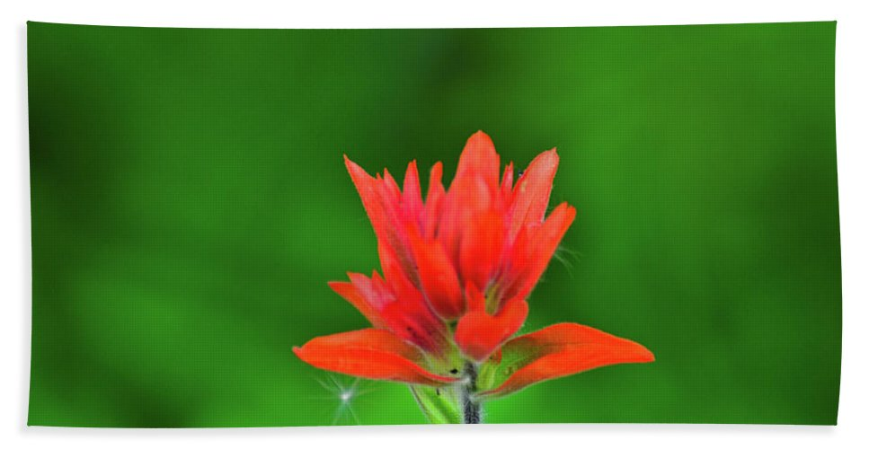 Flowers Beach Towel featuring the photograph Paintbrush by Greg Norrell