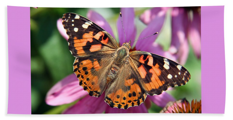 Painted Lady Beach Towel featuring the photograph Painted Lady Butterfly by Margie Wildblood
