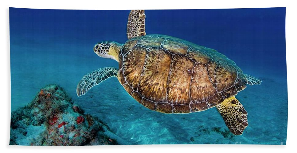 Turtle Beach Towel featuring the photograph Painted Turtle by Craig Dietrich