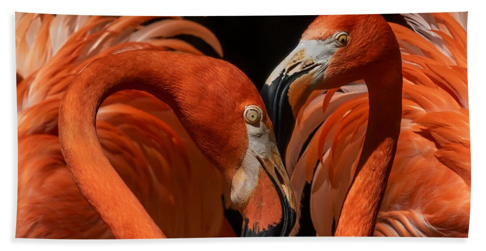Pair Of Flamingos Beach Towel featuring the photograph Pair Of Flamingos by Elizabeth Waitinas