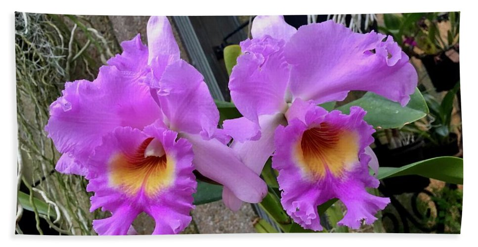 Art Beach Towel featuring the photograph Pretty Purple Orchids by Jeannie Rhode