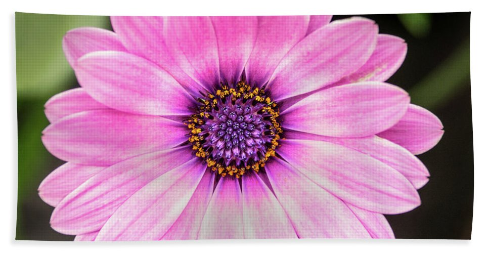 Flower Beach Towel featuring the photograph Pale Purple Flower by Don Johnson