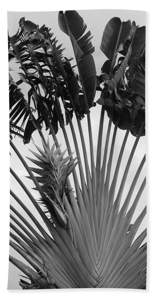 Macro Beach Towel featuring the photograph Palm Frons by Rob Hans