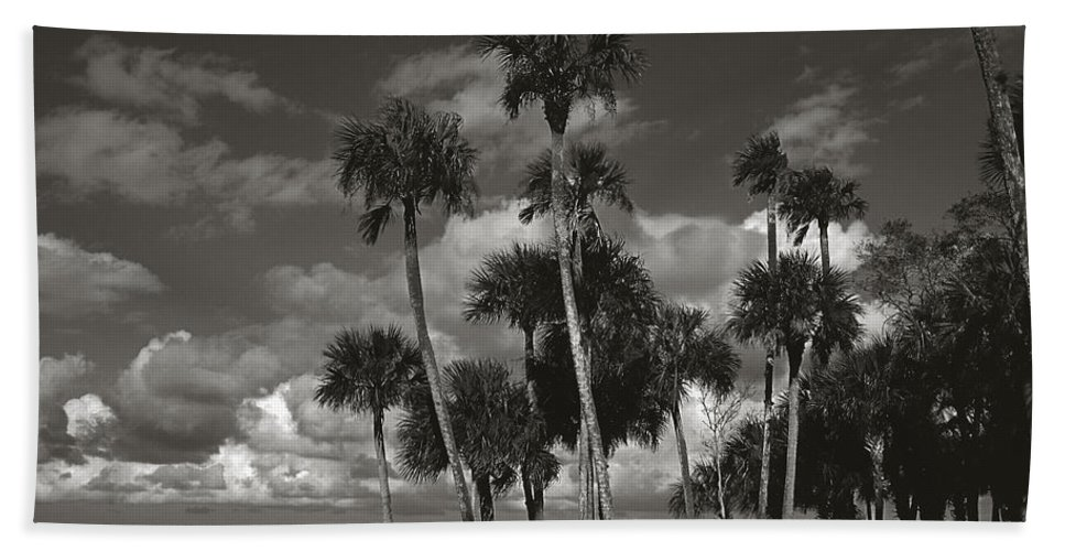 Palm Group Beach Towel featuring the photograph Palm Group In Florida Bw by Susanne Van Hulst