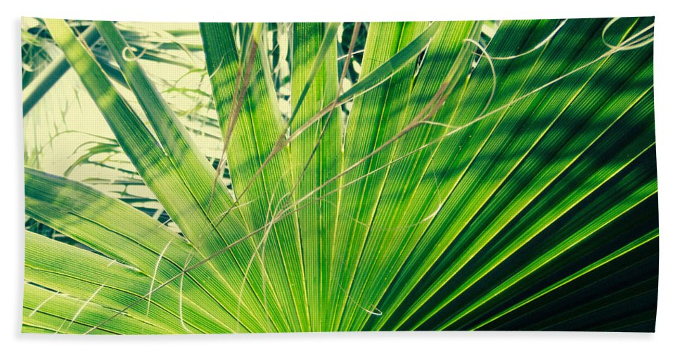 Garfield Park Conservatory Beach Towel featuring the photograph Palm House Branch by Kyle Hanson