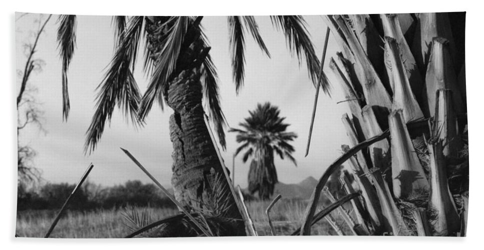 Black And White Photograpy Beach Sheet featuring the photograph Palm In View Bw Horizontal by Heather Kirk