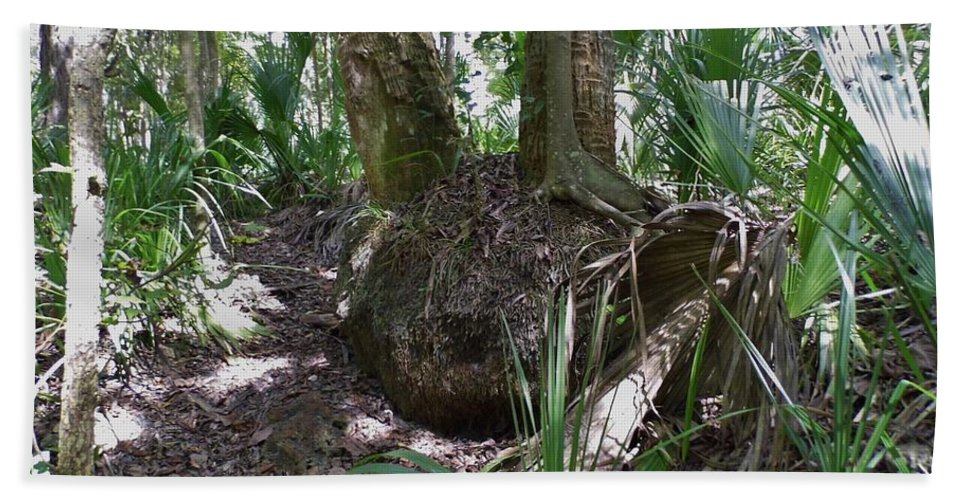Roots Beach Towel featuring the photograph Palm Roots by D Hackett