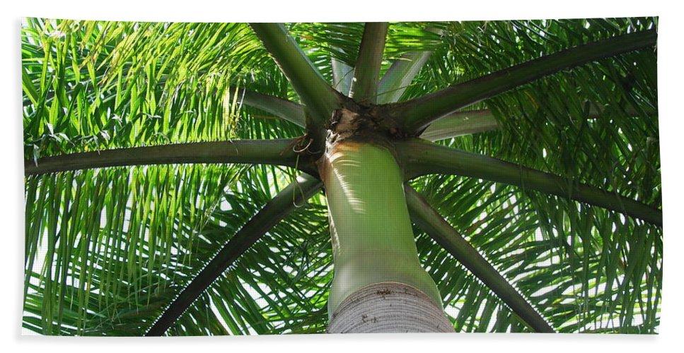 Macro Beach Sheet featuring the photograph Palm Unbrella by Rob Hans