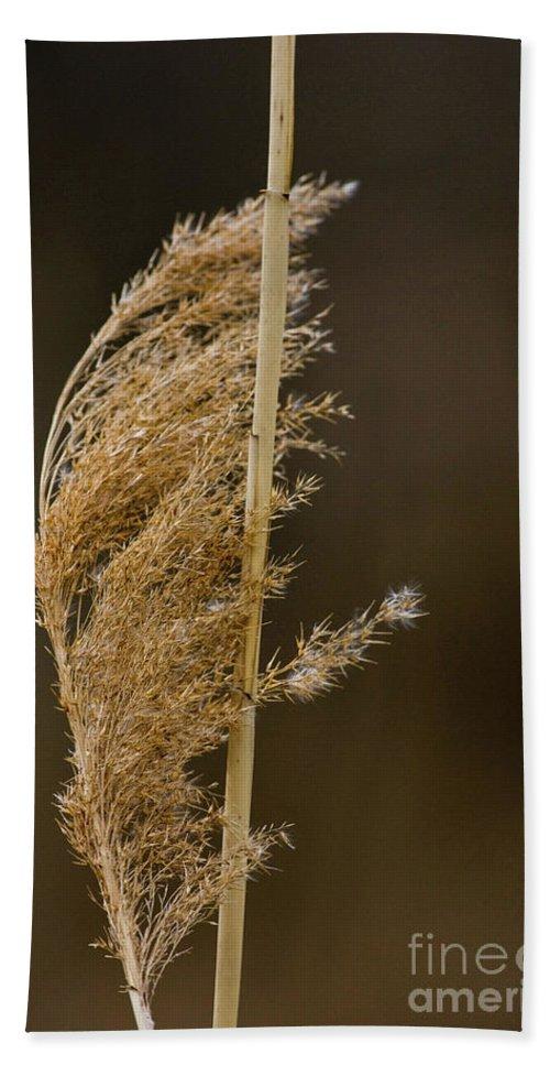 Beige Beach Towel featuring the photograph Pampas Grass by Alan Look