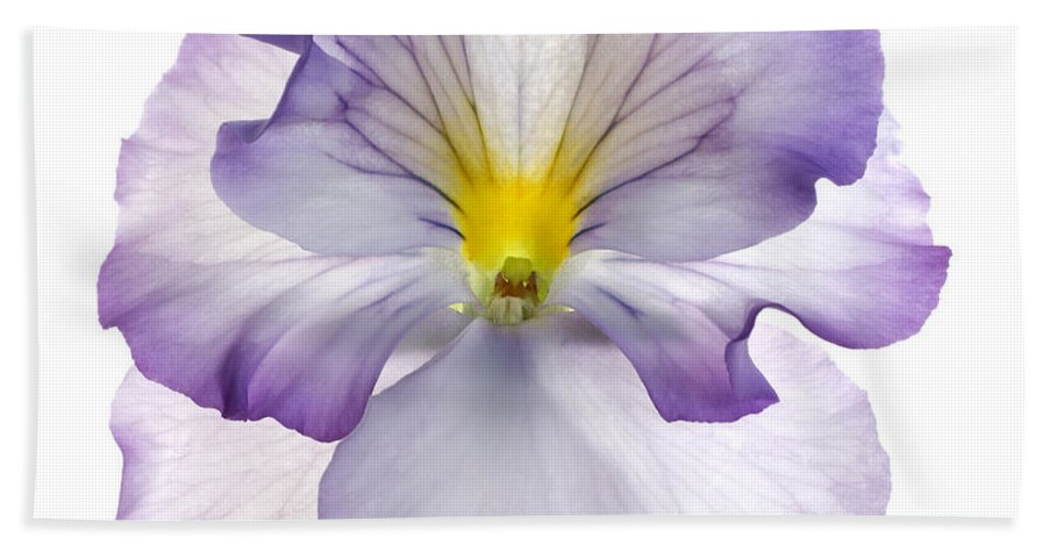 Pansy Genus Viola Beach Towel featuring the photograph Pansy by Tony Cordoza