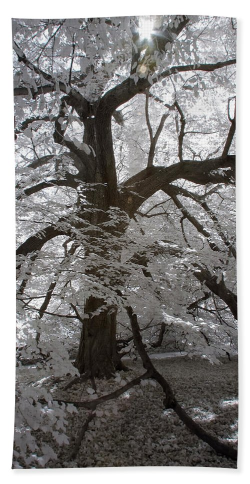 Charlottsville Beach Towel featuring the photograph Paper Mulberry In Infrared by Liza Eckardt