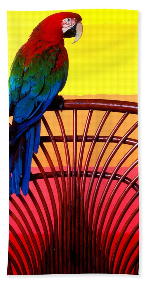 Parrot Beach Towel featuring the photograph Parrot Sitting On Chair by Garry Gay