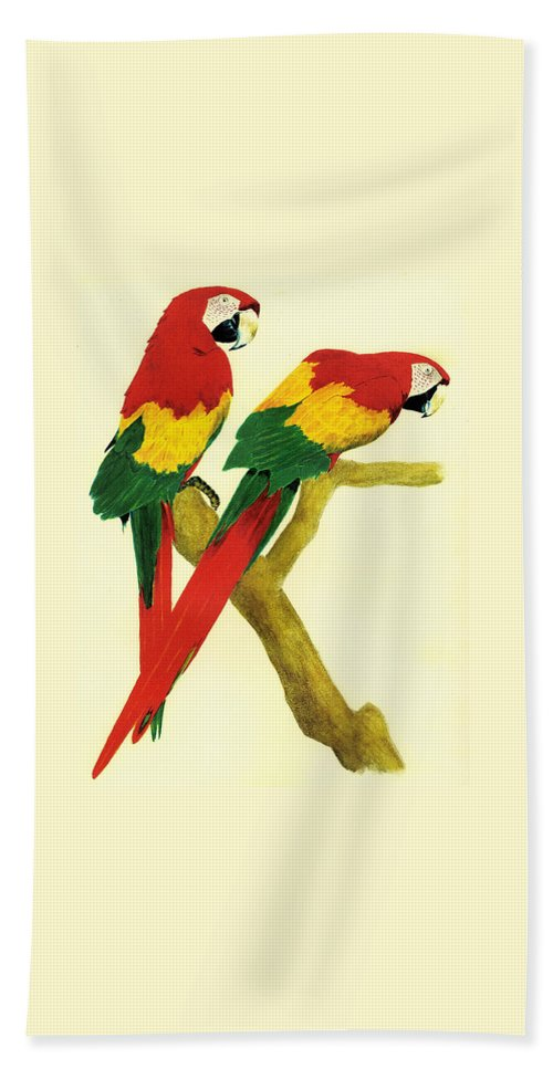 Animals Beach Towel featuring the painting Parrots by Michael Vigliotti