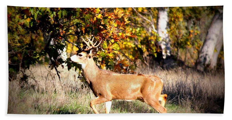 Animal Beach Towel featuring the photograph Passing Buck In Autumn Field by Carol Groenen