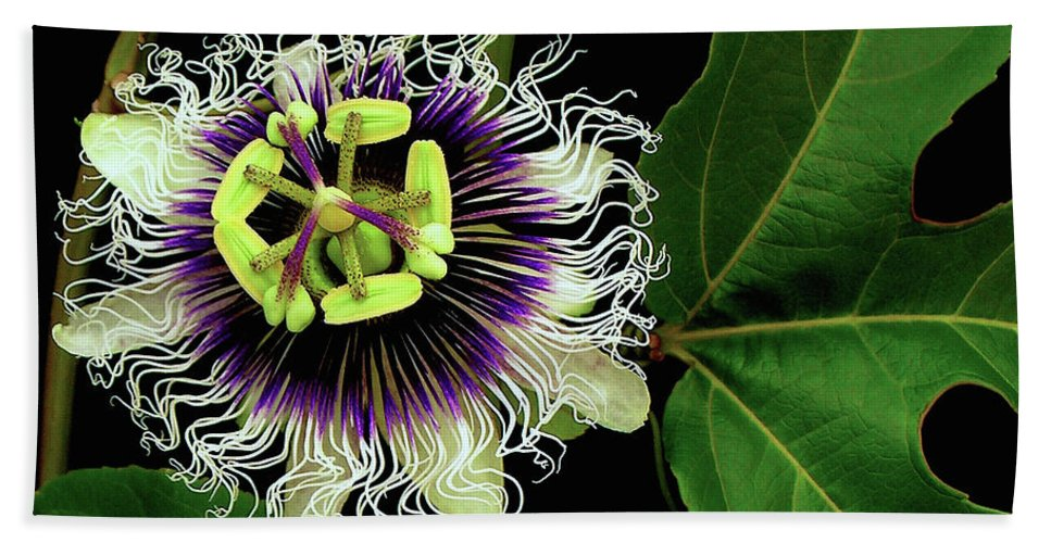 Hawaii Iphone Cases Beach Sheet featuring the photograph Passion Flower by James Temple
