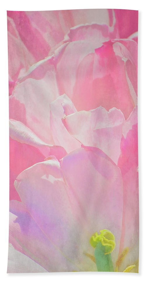Pink Beach Towel featuring the photograph Pastel Pink Petals by Chris Lord