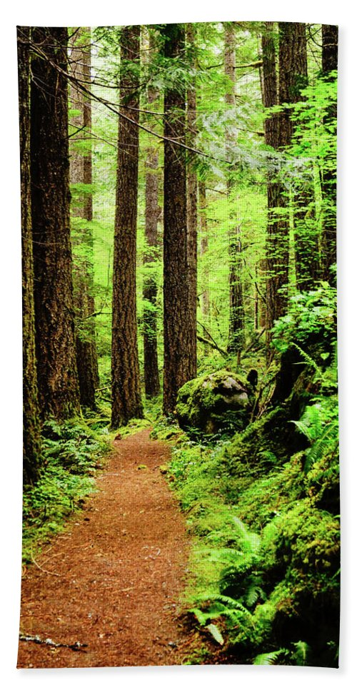 Woods Beach Towel featuring the photograph Path To Peace by Tim Dussault