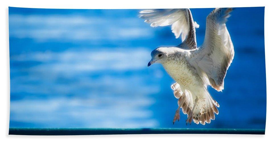 Animal Beach Towel featuring the photograph Peace Gull by Rich Leighton