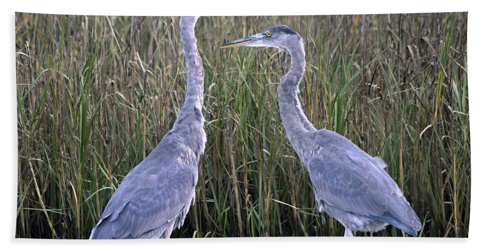 Topsail Beach Towel featuring the photograph Peaceful Pair by Betsy Knapp