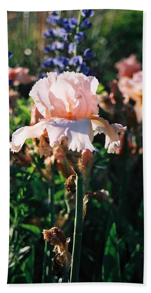 Flower Beach Towel featuring the photograph Peach Iris by Steve Karol